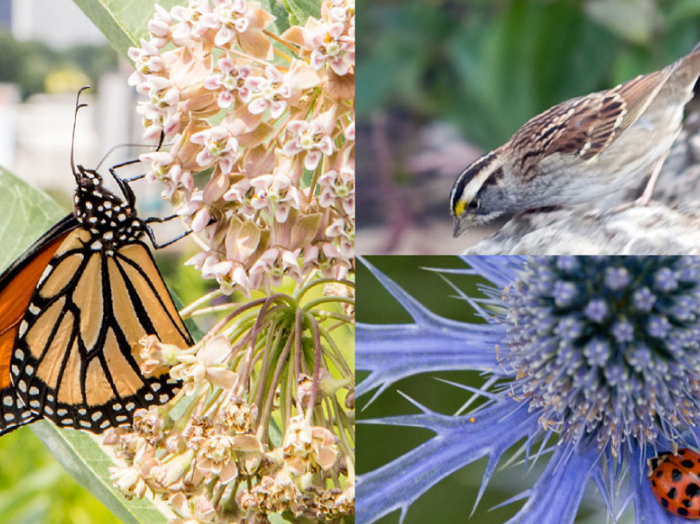 Wildlife; butterfly, small bird and a flower